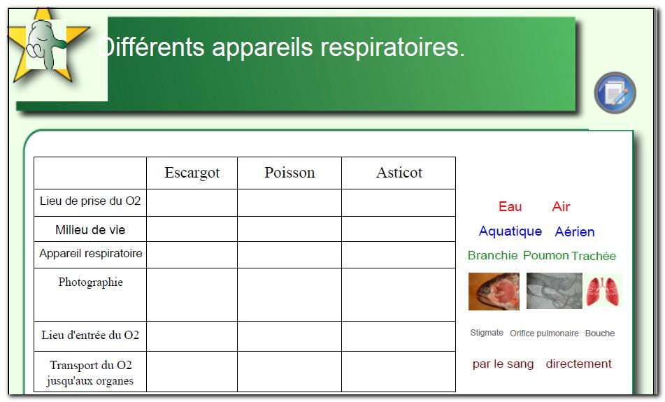 Svt Schemas Bilans Des Differents Appareils Respiratoires